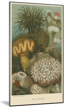 Sea Anemones--Mounted Art Print