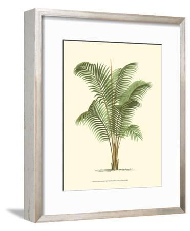 Coastal Palm II--Framed Art Print