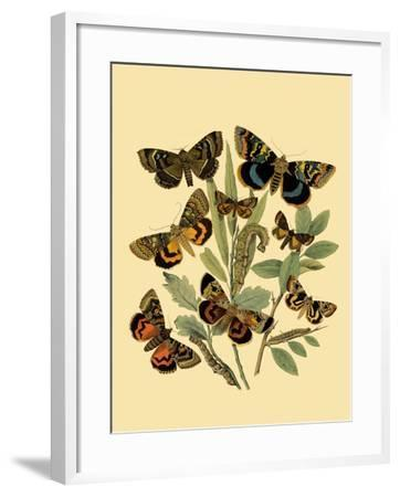 Small Butterfly Gathering III-Vision Studio-Framed Art Print
