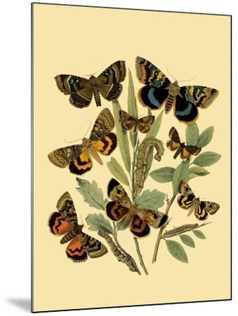 Small Butterfly Gathering III-Vision Studio-Mounted Art Print