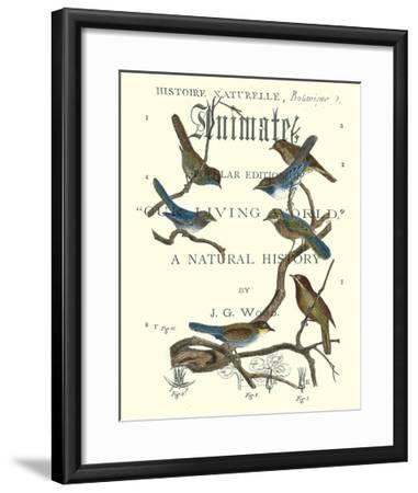 Non Embellish Vintage Ornithology II-Vision Studio-Framed Art Print