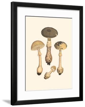 Curtis Mushrooms II-Samuel Curtis-Framed Art Print
