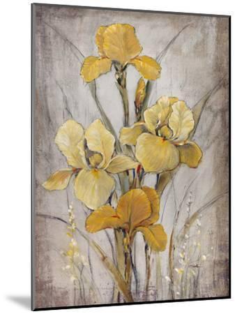 Golden Irises I-Tim O'toole-Mounted Art Print