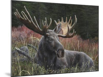 Recumbent Moose-Kevin Daniel-Mounted Art Print