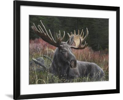 Recumbent Moose-Kevin Daniel-Framed Art Print