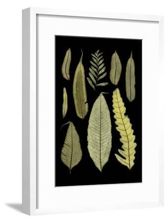 Ferns on Black II--Framed Art Print