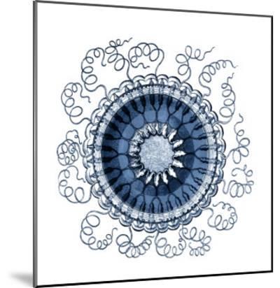 Ocean Gems III-Vision Studio-Mounted Art Print
