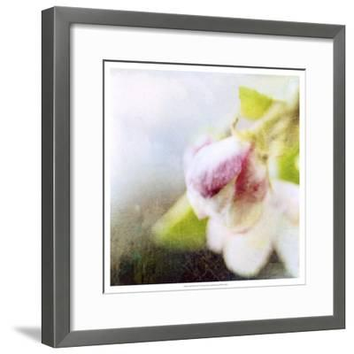 Apple Blossom II--Framed Art Print