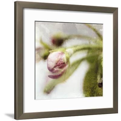 Apple Blossom III--Framed Art Print