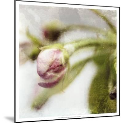 Apple Blossom III--Mounted Art Print