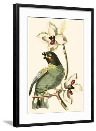 Cuvier Exotic Birds III-Georges Cuvier-Framed Art Print