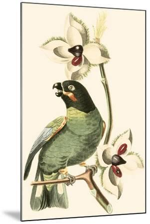 Cuvier Exotic Birds III-Georges Cuvier-Mounted Art Print