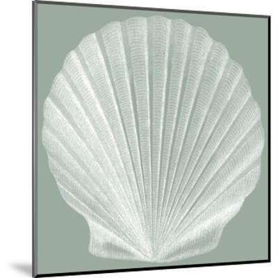 Seabreeze Shells II-Vision Studio-Mounted Art Print