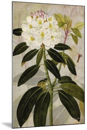 Rhododendron I-John Butler-Mounted Art Print