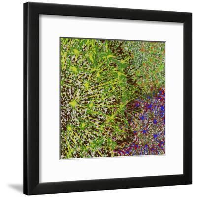 Profusion II-James Burghardt-Framed Art Print