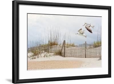 Water Bird Glimpse I-PHBurchett-Framed Art Print