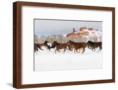 Snow Run III-PHBurchett-Framed Art Print