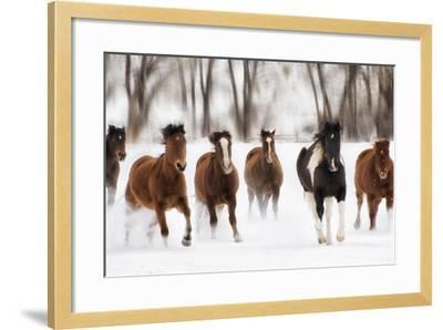 Snow Run I-PHBurchett-Framed Art Print