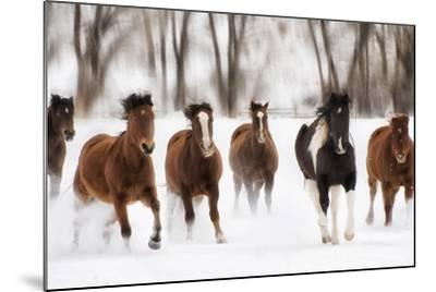 Snow Run I-PHBurchett-Mounted Art Print