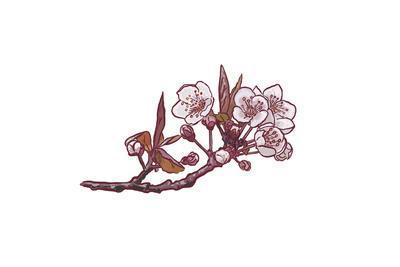 Cherry Blossom - Icon-Lantern Press-Framed Art Print
