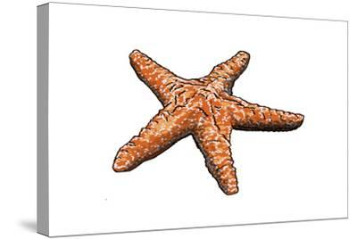 Starfish - Icon-Lantern Press-Stretched Canvas Print