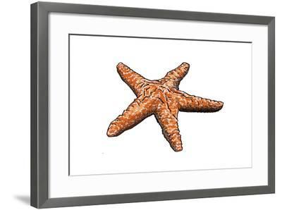 Starfish - Icon-Lantern Press-Framed Art Print
