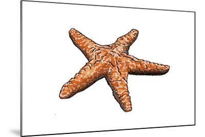 Starfish - Icon-Lantern Press-Mounted Art Print