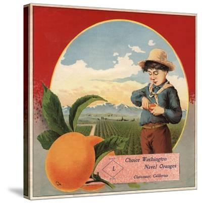Boy in Orchard - Claremont, California - Citrus Crate Label-Lantern Press-Stretched Canvas Print