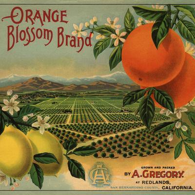 Orange Blossom Brand - Redlands, California - Citrus Crate Label-Lantern Press-Art Print
