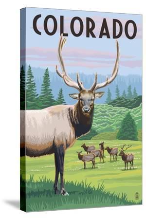 Colorado - Elk Herd-Lantern Press-Stretched Canvas Print