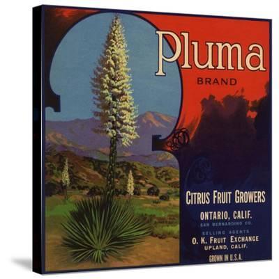 Pluma Brand - Upland, California - Citrus Crate Label-Lantern Press-Stretched Canvas Print