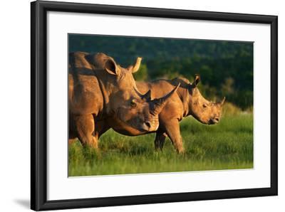 White Rhinoceros-Lantern Press-Framed Art Print