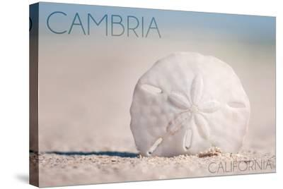 Cambria, California - Sand Dollar and Beach-Lantern Press-Stretched Canvas Print