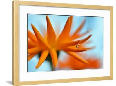 Sprawling Orange-Heidi Westum-Framed Photographic Print