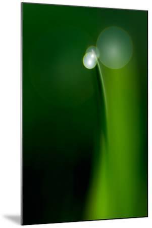 Grass Blade-Ursula Abresch-Mounted Photographic Print