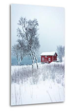 Alone in White-Philippe Sainte-Laudy-Metal Print