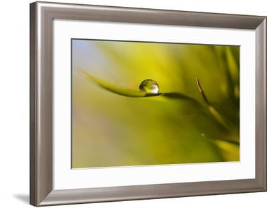 Lonely Green Drop-Heidi Westum-Framed Photographic Print