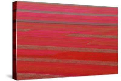 Red Land-Marco Carmassi-Stretched Canvas Print