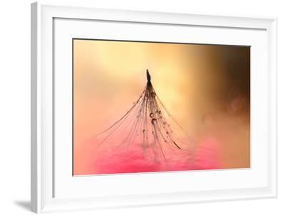 Dancing in Pink-Heidi Westum-Framed Photographic Print