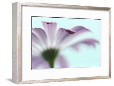 Barely-Heidi Westum-Framed Photographic Print