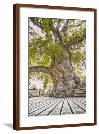 Oak Guillotin-Viviane Fedieu Daniel-Framed Photographic Print