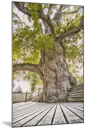 Oak Guillotin-Viviane Fedieu Daniel-Mounted Photographic Print