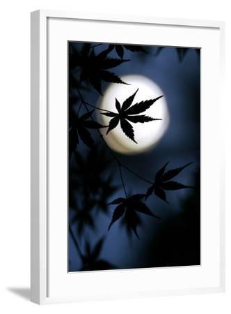 Color of Japan-Kouji Tomihisa-Framed Photographic Print