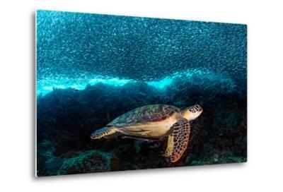 Turtle and Sardines-Henry Jager-Metal Print