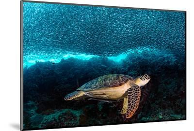 Turtle and Sardines-Henry Jager-Mounted Photographic Print