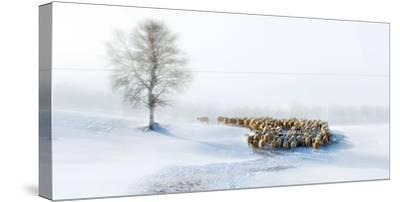 In Snow-Hua Zhu-Stretched Canvas Print
