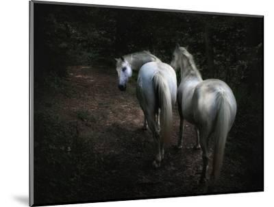 Come-Holger Droste-Mounted Photographic Print
