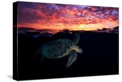 Sunset Turtle-Barathieu Gabriel-Stretched Canvas Print