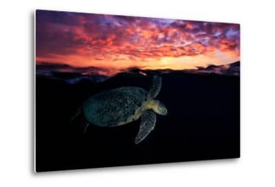 Sunset Turtle-Barathieu Gabriel-Metal Print