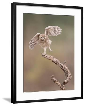 I'm Just a Gigalo-Amnon Eichelberg-Framed Photographic Print